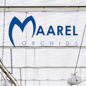 Case Study - Maarel Orchids